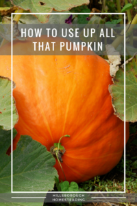 how to use up pumpkin