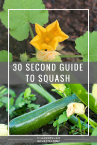 guide to growing squash