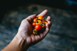 cherry tomatoes in a hand
