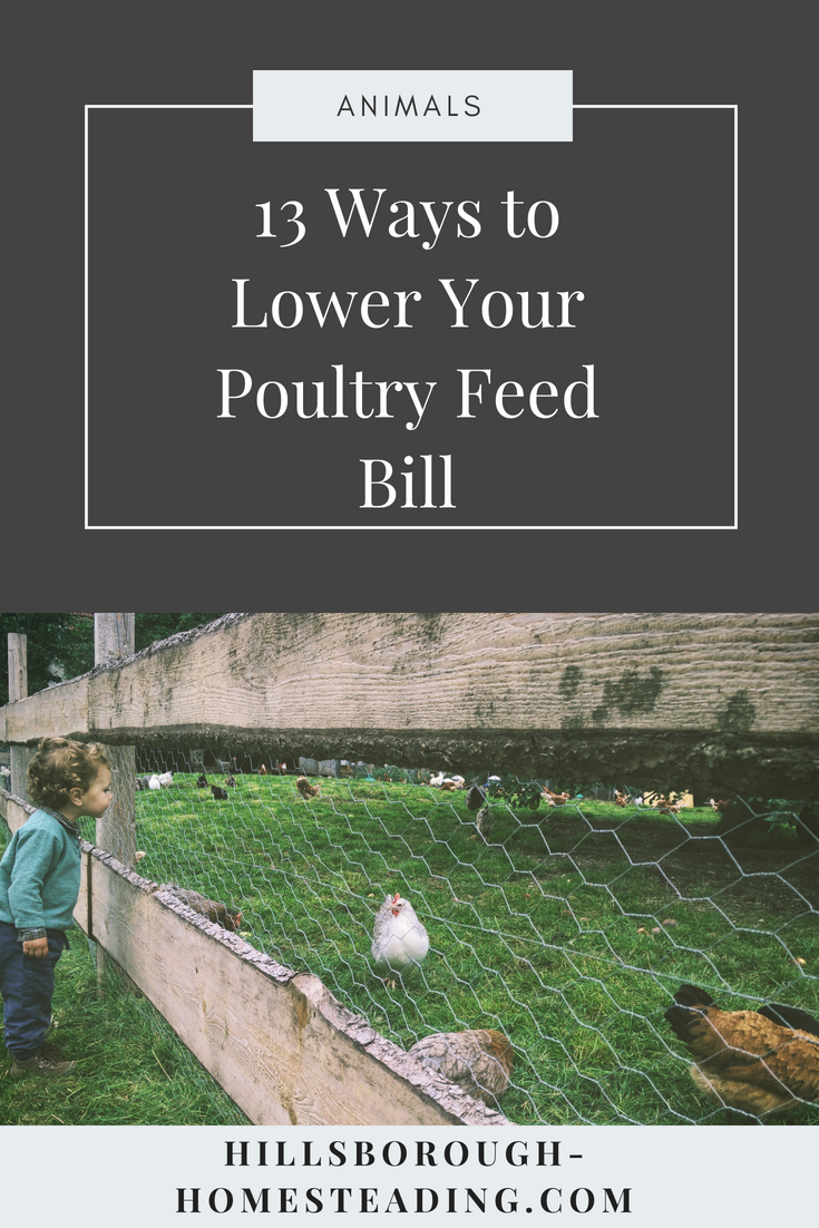 how to lower chicken feed cost bill diy