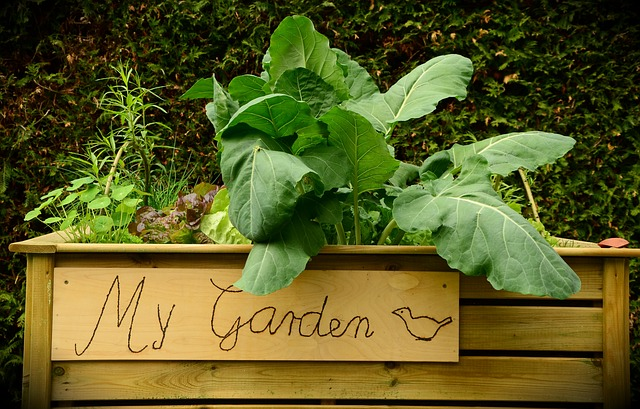 How to Tame an Out of Control Garden