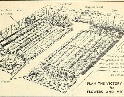 A Victory Garden – Vintage Advice for a Modern Time