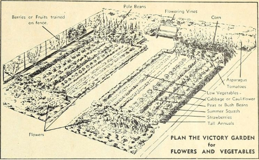 What Is A Victory Garden – Vintage Advice for a Modern Time