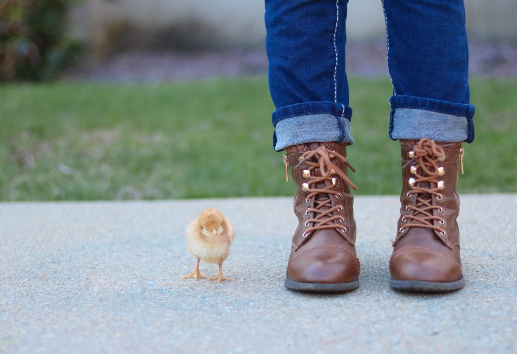 little yellow chick next to boots