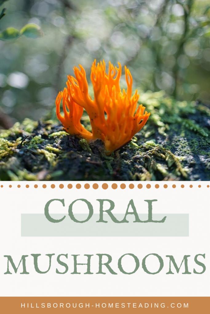 orange crown-tipped coral mushroom