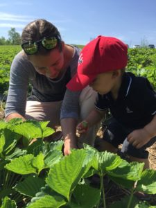 woman and toddler picking strawberries