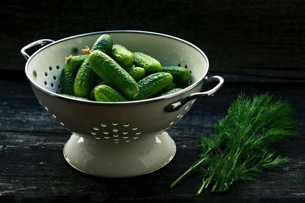 small pickling cucumbers in a white colander next to a bunch of dill