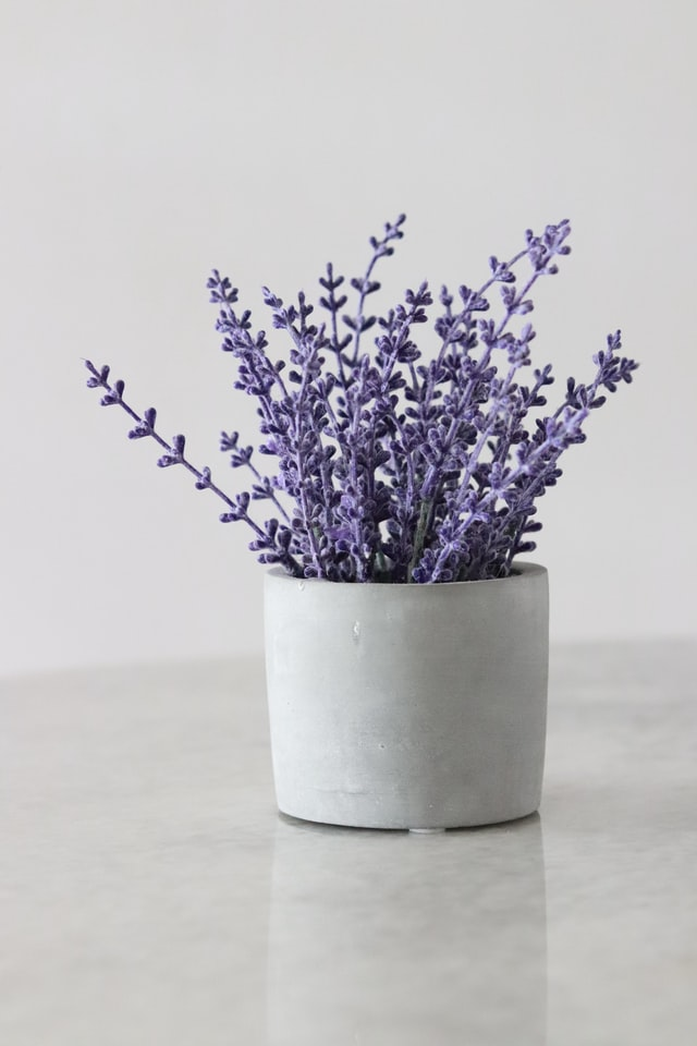bunches of lavender in a white cup