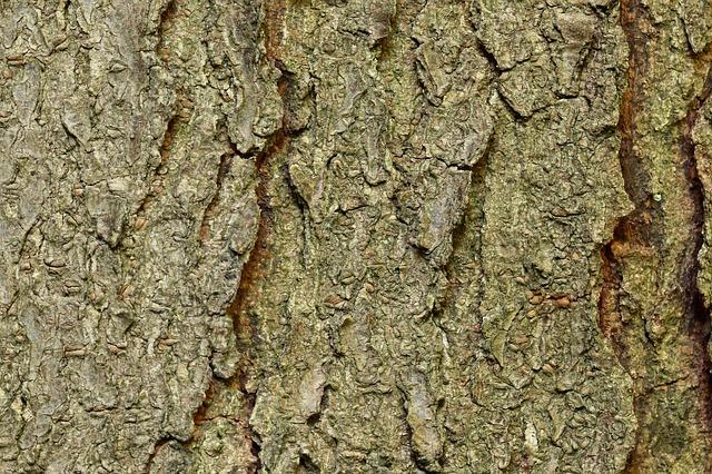 type of locust wood
