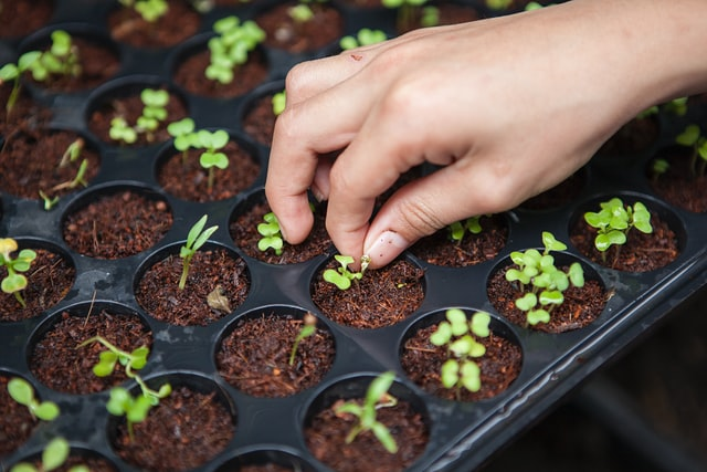 how to start seeds indoors