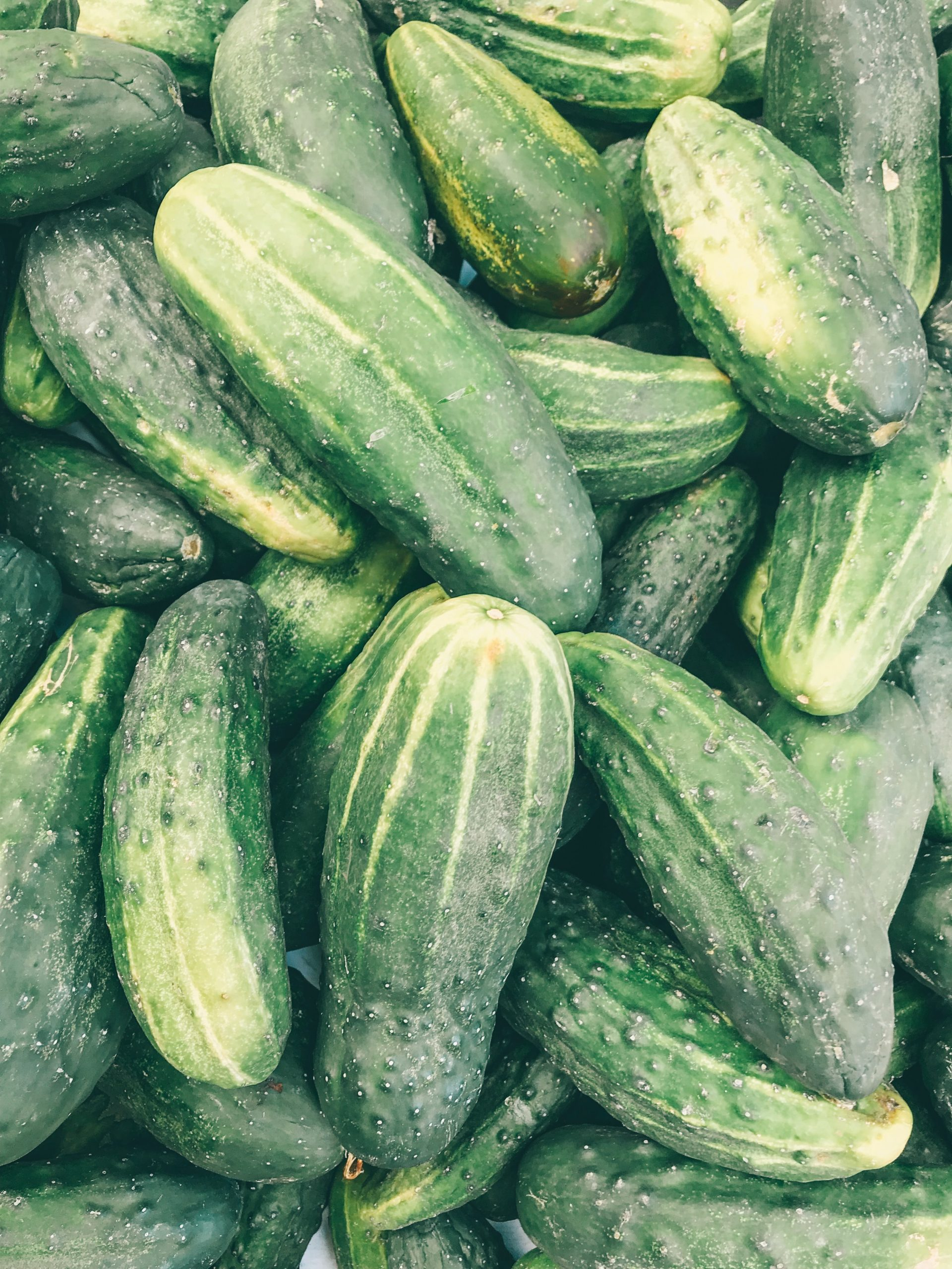 Large harvest of cucumbers