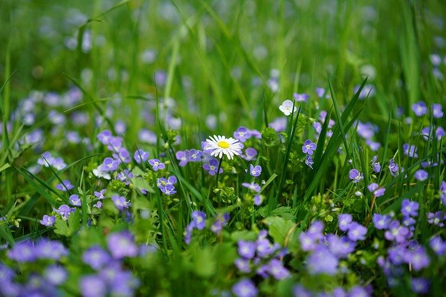 edible weeds in your own backyard