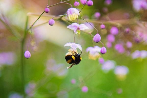 plants that attract pollinators to your vegetable garden