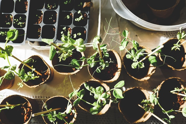 many seedlings of plants to start your homestead