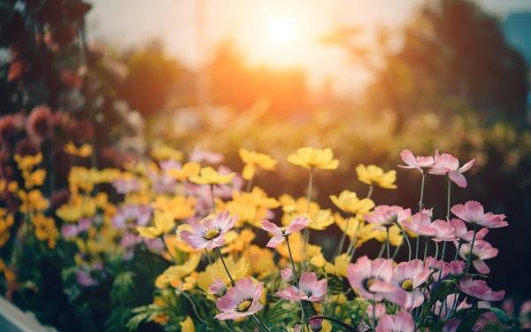 bright flowers in sunshine in a garden