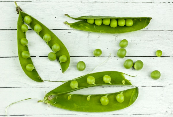 beginner's guide to growing peas