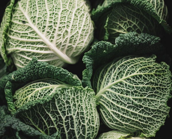beginner's guide to growing cabbage