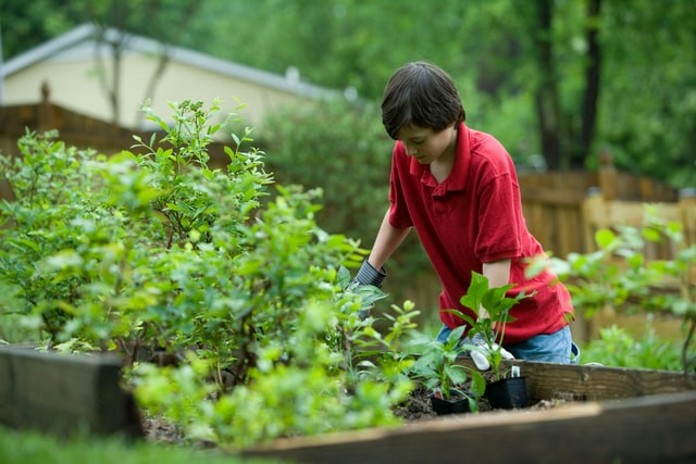 boy gardening in a raised garden bed