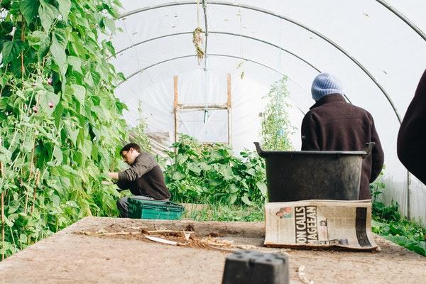 pest garden services