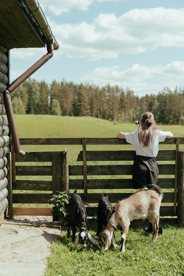a girl on her homestead with goats