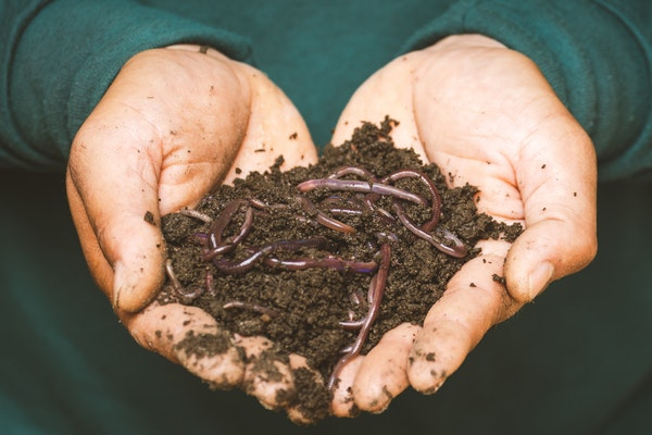 hands holding vermicomposting worms