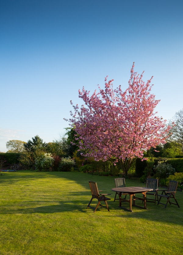Giving Your Garden The Wow Factor Whatever The Weather
