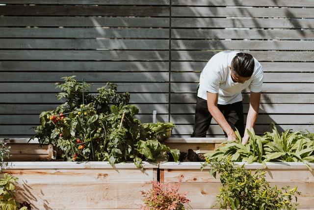 gardening for beginner homesteaders