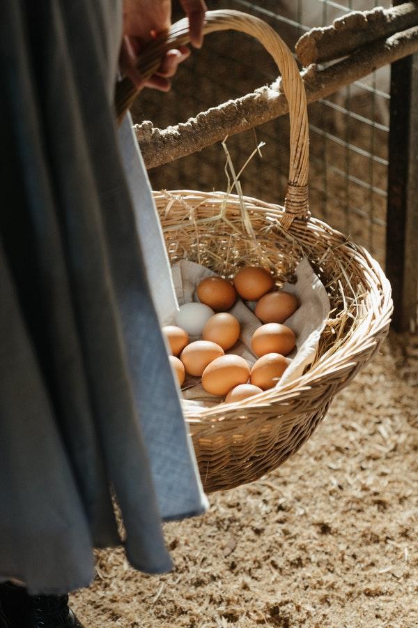 best homesteading blogs