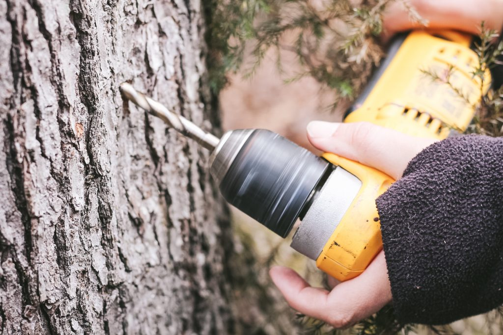 how to tap maple trees for syrup
