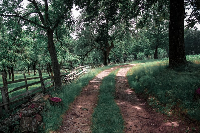 homesteading in tennessee