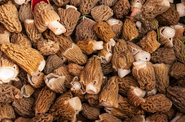 cooking with morel mushrooms