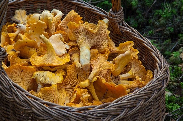 chanterelle mushrooms recipes