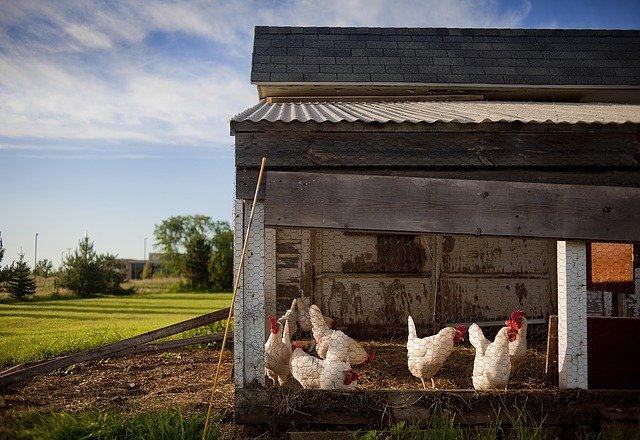 chicken coop supplies
