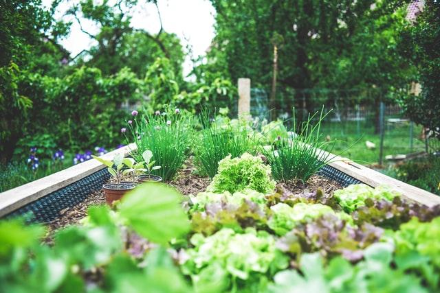 topsoil vs compost for vegetable garden