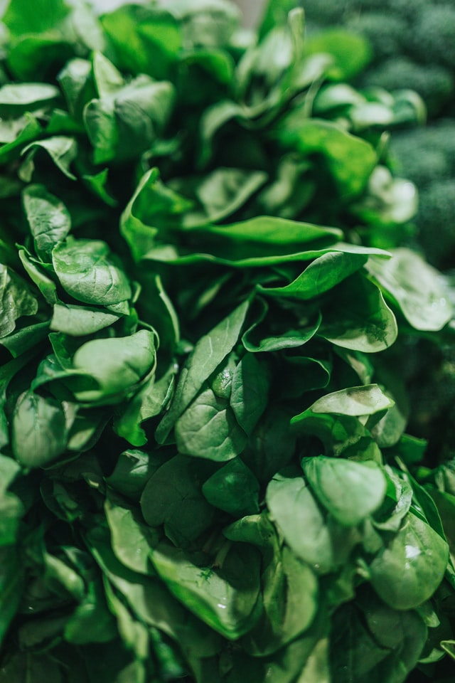 close up of a bunch of spinach