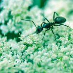 9 Natural Remedies for Ant Bites