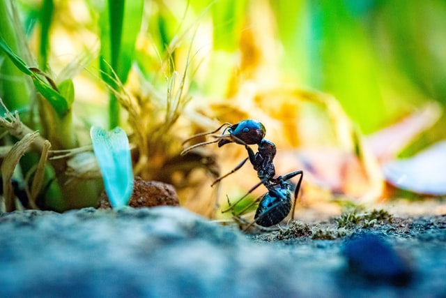 remedies for ant bites in children and toddlers